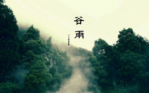 时节谷雨 |  诗写梅花月, 茶煎谷雨春